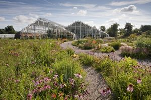 The Hitchmough Prairie Meadow round the Glasshouse at RHS Garden Wisley